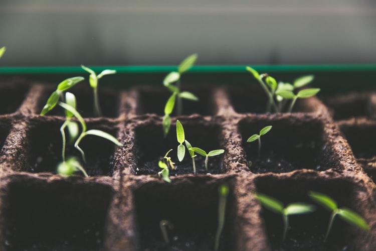 Plants Growing Membership Growth
